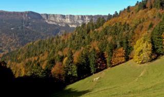 Jura hillside